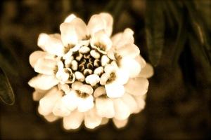 Mandagspoesi: Fra en annen virkelighet